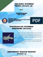 Angga Febrian (F1C115006) Protozoa (Amoeba Sp)