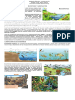 Ecosistemas y Su Estructura