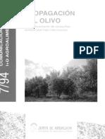 propagacion olivo estaquillas
