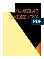 20150303143417 Quiromasaje Cadenas Musculares Miembro Inferior