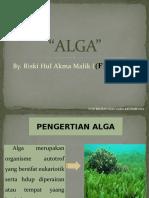 Ppt Alga (Riski Hul Akma Malik)
