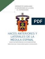 #7 HACES ANTERIORES Y LATERALES DE LA MÉDULA ESPINAL madison JL.docx