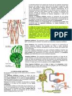 como funciona el sistema linfático