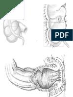 Anatomia 1.0