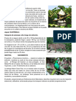 animales peligro de extinsion.docx