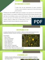 Plantas colombianas.pptx