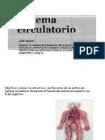 Sistema Circulatorio Primer Nivel