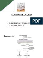 URP Ciclo de La Urea