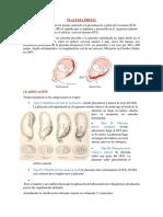 obtetricia placenta.docx