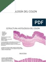 HISTOLOGÍA DEL COLON.pptx