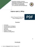 Cajanus Cajan (L.) Hill Sp.