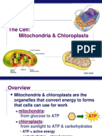 Mitochondria and Chloroplasts PPT