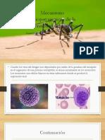 Soribel Dengue