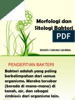 Morfologi Dan Sitologi Bakteri