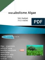 Metabolisme Algae Sitti Hadijah