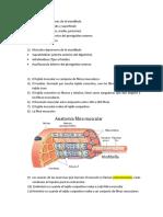 Apuntes sistema estomatognático