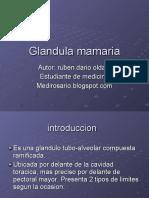 glandulamamaria-