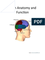 Brain Anatomy and Function
