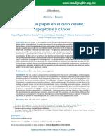BCL2 SU PAPEL EN EL CICLO CELULAR - APOPTOSIS Y CANCER.pdf