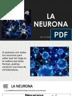Clase Nº 3 - Neurona y Tipos - Copia