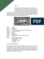 Docdownloader.com Descripcion Zoologica Del Cuy