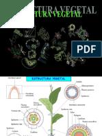 Estructura Vegetal 1bach