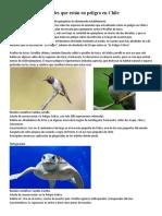 Las Especies de Animales Que Están en Peligro en Chile