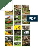 gambar hewan
