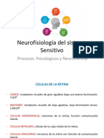 Clase 4 Neurofisiologiìa Sistema Sensitivo II Psic122 2018 (Otra Version)