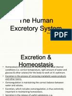 thehumanexcretorysystem-111118094219-phpapp02