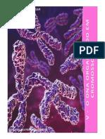 5_cromossomas