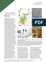 Termitas y fuerzas geológicas