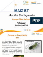 Presentacion maiz BT