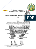Análisis morfológico y elemental del pelo de alpaca.docx