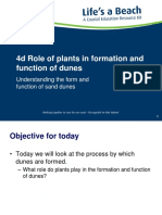 4d Role of Plants in Formation and Function of Dunes