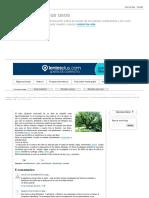 Las Plantas y Sus Usos_ Ceibo