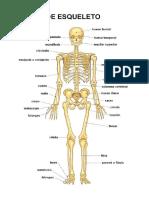 Anatomia Del Esqueleto