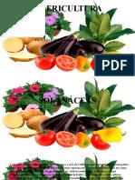 Olericultura Tema 04