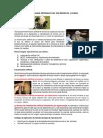 BIOTECNOLOGÍAS REPRODUCTIVAS CON RESPECTO A OVINOS.docx