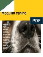 AV_24_Moquillo_canino.pdf