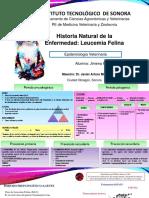 LEUCEMIA FELINA54.pptx