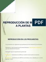 Reproduccindemonerasaplantas 110329154958 Phpapp01 (1)