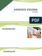 piroplasmosis equina