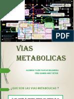 Vias Metabolicas Trabajo 3.1