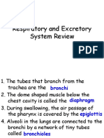 Respiratory and Excretory System Review