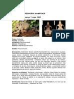 apendice_217pequenos_mamiferos