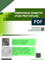 5843_4. Fusi Protoplas