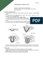 1 - Embriologia Do Sistema Nervoso