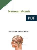 neuroanatomia diapositiva