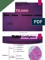 1er Seminario Tejido Óseo y Cartilaginoso